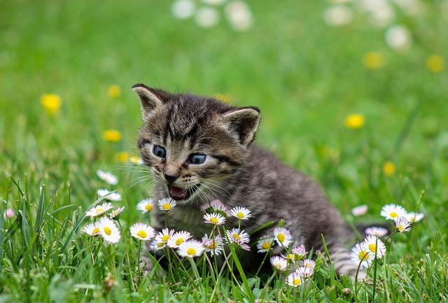 imgage catégories Animals (services)