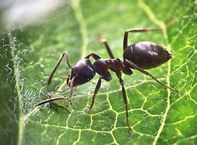 Exterminateur- fourmis- araignées- guêpes- punaises de lit