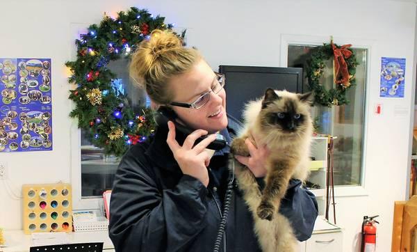 Autres à dorval | pension pour les chats, toilettage, livraison au... manoir kanisha (ouest de l'île de montréal, dorval)